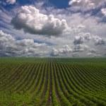 Field landscape — Stock Photo #29504363