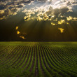 Field with Sun Beams — 图库照片