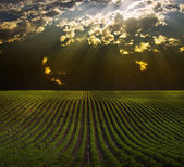 Field with Sun Beams — Stock Photo