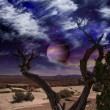 Desert Tree — Stock Photo