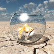 Gold fish in glass bowl in barren desert — Stock Photo