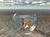 Gold fish in glass bowl in barren desert — Stock Photo