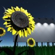 Night roadside billboard with sunflowers — Stock Photo