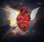 Heart flight — Stock Photo