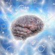 Brain — Stock Photo #41003135
