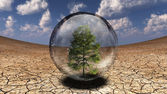 Tree inside bubble — Stock Photo