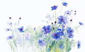 Watercolor blue cornflowers — Stock Photo