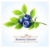 Blueberry branch — Stock Vector