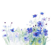 Watercolor cornflowers — Stock Photo