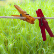 Two clothespins on green grass — Stock Photo