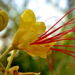 Yellow bird of paradise flower — Stock Photo
