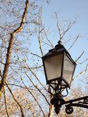 Street lamp and tree — Stock Photo