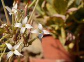 Мелкие белые цветочки — Стоковое фото