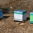 Bee hives — Stock Photo #40764865