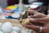 Balut — Stock Photo