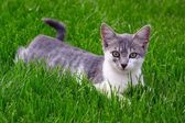 Domestic cat in the garden — Stock Photo