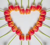 Tulip Heart — Stock Photo