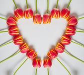Tulip Heart — Stock Photo