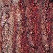 Stock Photo: Pine Bark