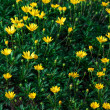 Yellow Wildflowers — Stock Photo #19202961