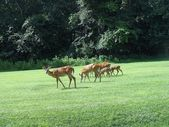 A deer family foraging on grass — Stock Photo