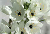 Bouquet of white little flowers — Стоковое фото