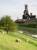 Fundición de clabecq y ovejas agradables — Foto de Stock
