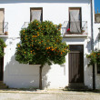 Stock Photo: Orange tree in Ronda, Spain