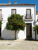 Orange tree in Ronda, Spain — Stock Photo