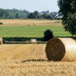 Stock Photo: Rolls of straw in fields