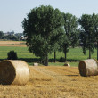 Stock Photo: Rolls of straw in sunny fields
