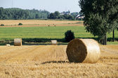 Rolls of straw in the fields — Stock Photo