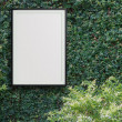 Stock Photo: Empty modern style frame 3d on Green leaves wall