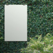 Blank paper card 3d Green leaves wall background — Stock Photo #32180803