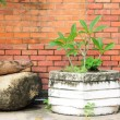 Whit plant pot with old stone — Stock Photo