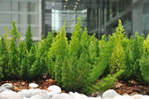Pequeñas plantas con piedras blancas — Foto de Stock