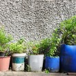 Stock Photo: Many plant-pots