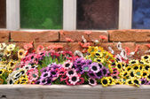 Colorful plastic flowers — Stock Photo