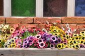 Flores de plástico coloridas — Foto de Stock