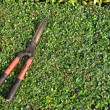 Used grasses scissor put on bush. — Stock Photo