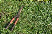 Used grasses scissor put on bush. — Stockfoto