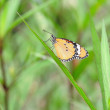 Butterfly rest on grass — Stock Photo #36212335