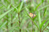 Butterfly rest on grass — Stock Photo
