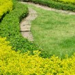 Curve green bushes — Stock Photo