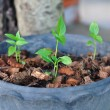 Baby trees growing up in pot with coconut residue. — Stock Photo