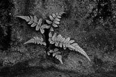 Ferns on stained rock — Stock Photo