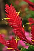 Nice red bouquet flowers — Stock fotografie
