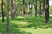 Kamu bahçe ağaçları — Stok fotoğraf