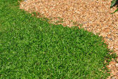 Green grasses and small stone separated — Stock Photo