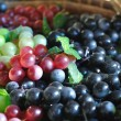 Many huddle color grapes fruit, green, red and black — Stock Photo #38799599